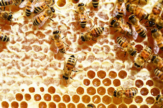 9 Interesting Facts About Honey Bees
