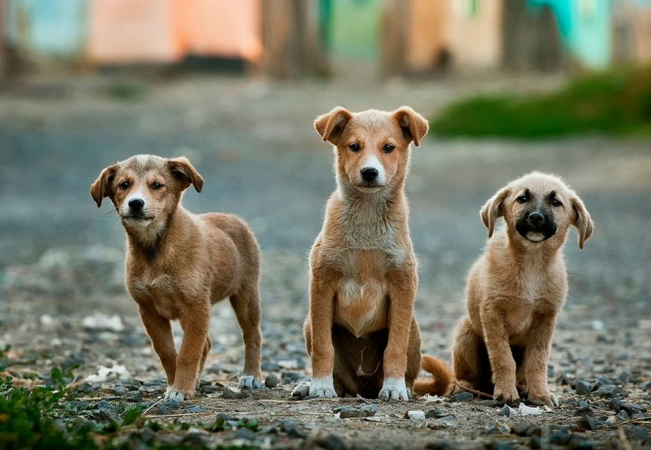 importância de esterilizar + cães + gatos+ telma e pedro + vida de pet