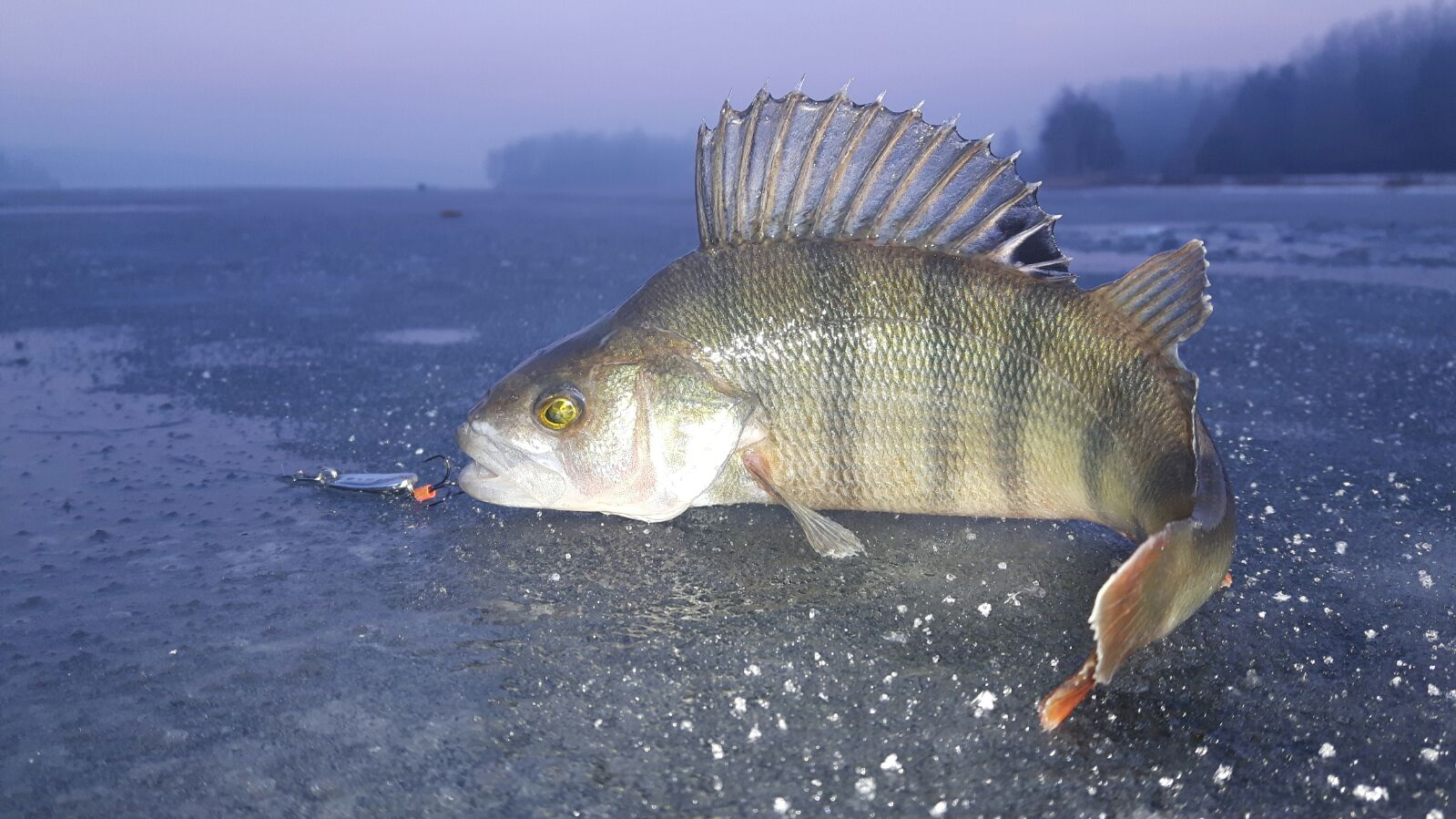 Fishing in poland spinning casting and flyfishing for Ice fishing perch lures