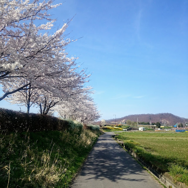 松代城跡 桜 千曲川