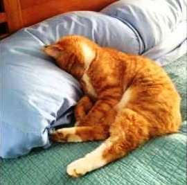 16 Fakta Menarik Tentang Kucing yang Kamu Wajib Tahu!