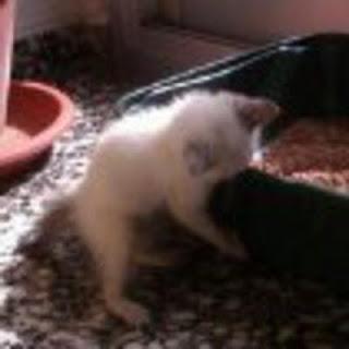 gato-limpio-arenero