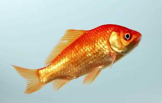 Gard : Par-dessus le mur de la prison, ils envoient des poissons rouges à un ami détenu