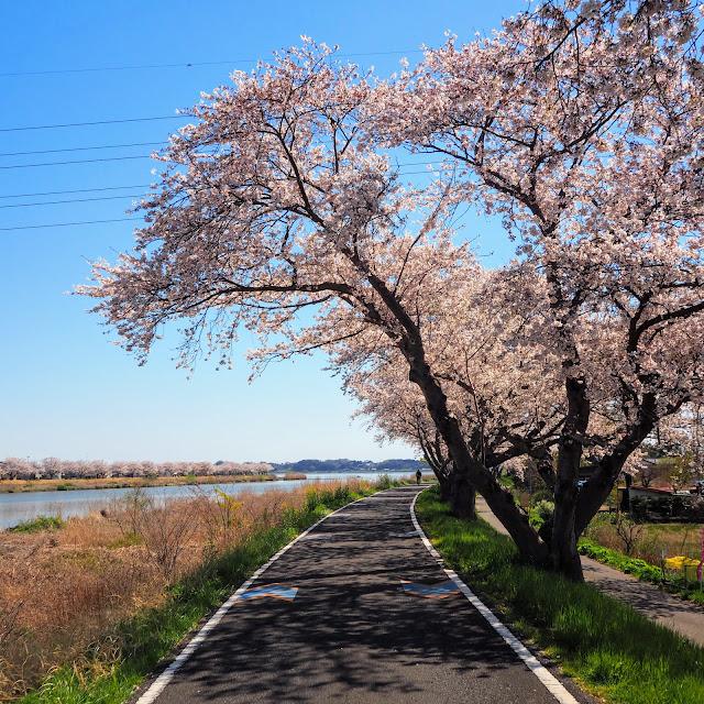 桜川 つくば霞ヶ浦りんりんロード
