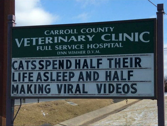 30 Hilarious Cat Jokes Vet Clinics Put Up On Their Signs