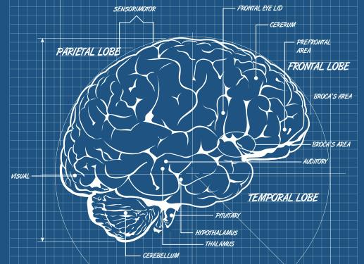 Neurasmus B.V. - Home