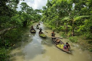 बांग्लादेश में अमरूद बाजार