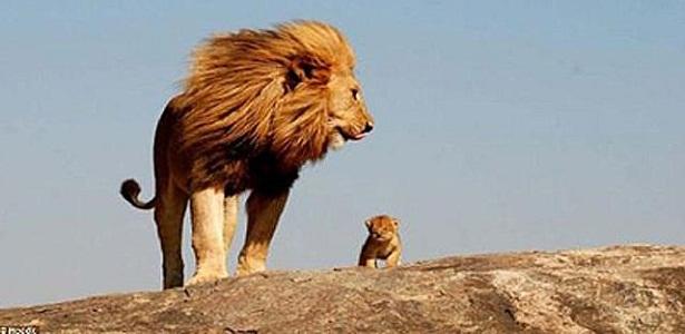 Hikayat Singa dan Kijang, Kisah Inspiratif, Mau jadi kijang atau singa, Bang Syaiha, http://bangsyaiha.com/