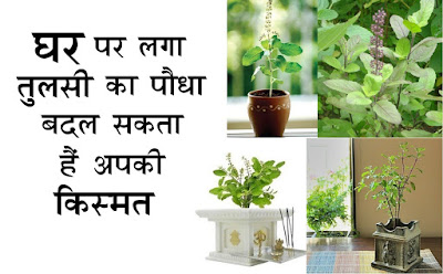 Tulsi Benefits, Facts about Tulsi