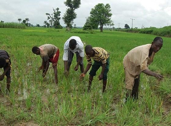 Anambra farmers to deepen productivity