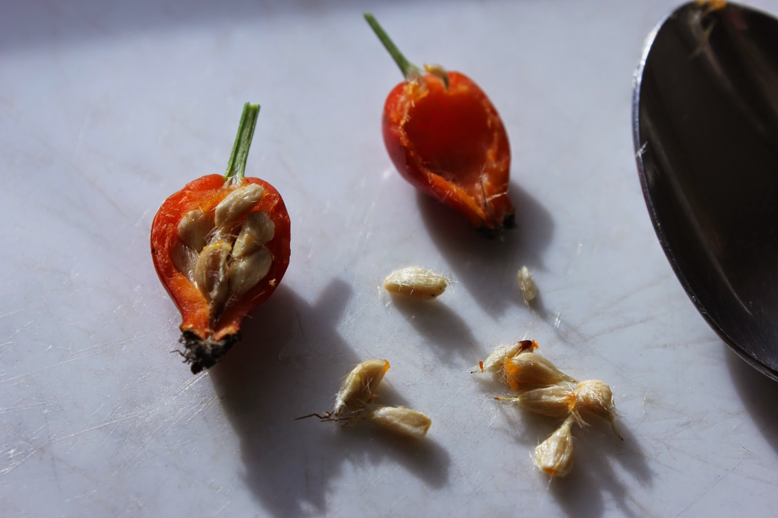 How to remove rose hip seeds