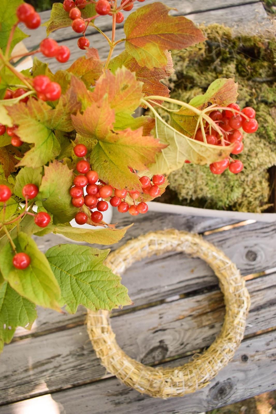 DIY Mooskranz einfach selber machen mit Moos Beeren Holz und Sisal. Naturdeko Anleitung zum Kranz binden. Dekorieren mit Natur. Zutaten herbstdeko