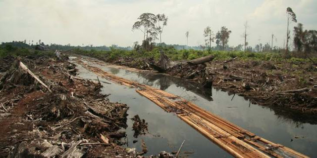Deforestration harus diwaspadai - Indonesia Zamrud Khatulistiwa