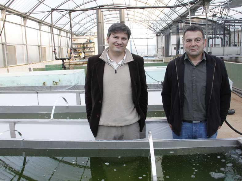 Sistema termosolar para la cr a de tilapia en adamuz for Cria de tilapia en estanques pequenos