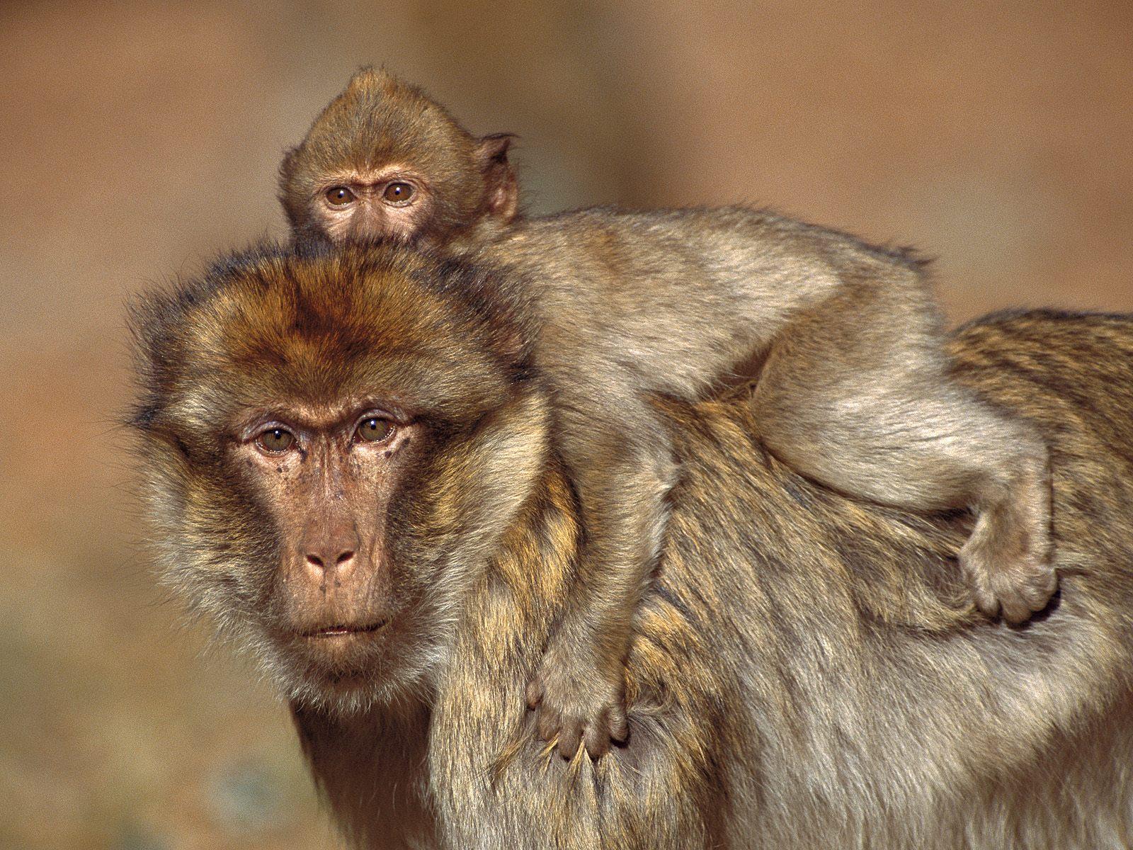 Encyclopaedia Of Babies Of Beautiful Wild Animals Amazing