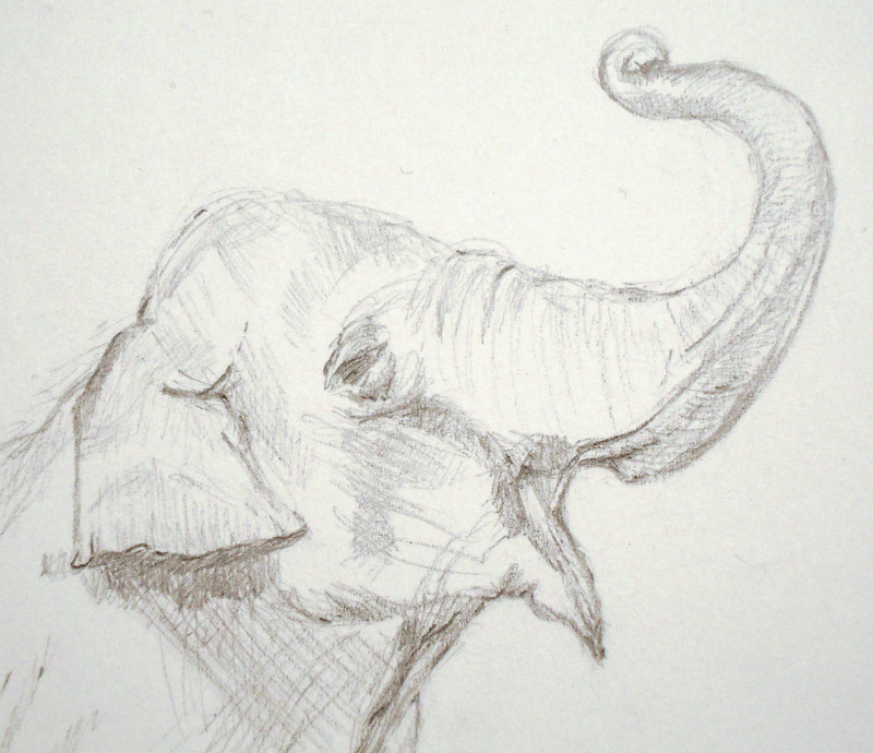 elephant face drawing - photo #10