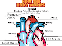 Heart Chambers Diagram