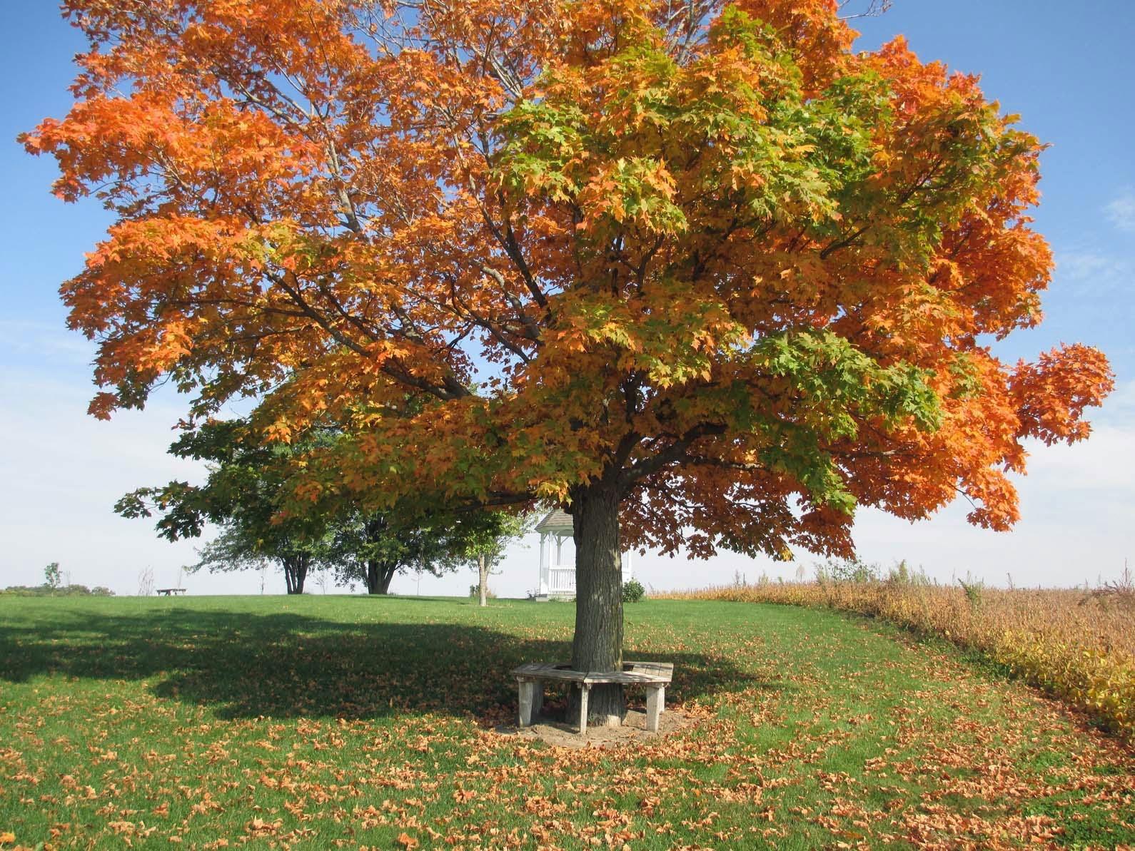 Autumn Leaves Ground