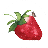my giant strawberry, strawberry illustration, butterfly, watercolor, Anne Butera