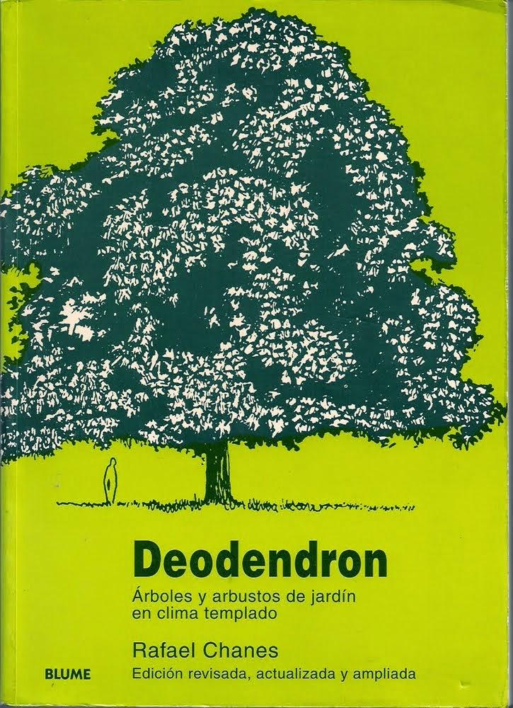 Deodendron for Jardines con arboles y arbustos