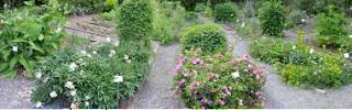 زراعة الأعشاب الطبية في المنزل