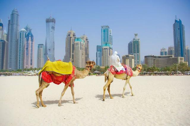 Go on a Gratifying Tour in the Dubai Desert