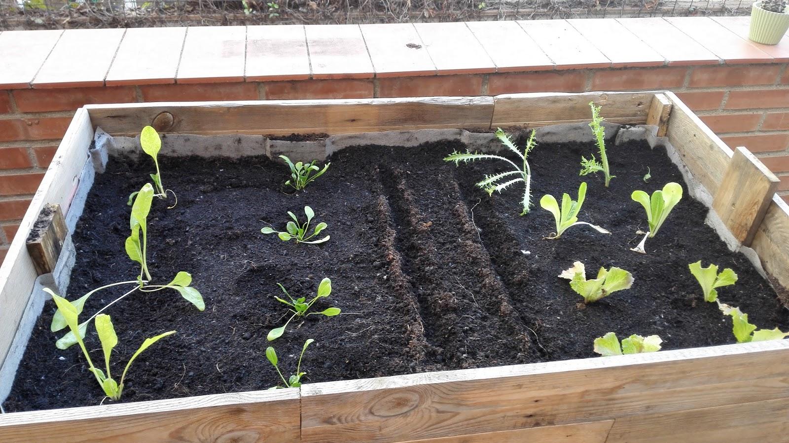Los pasarratos huerto urbano cultivo de oto o for Cultivo pimiento huerto urbano