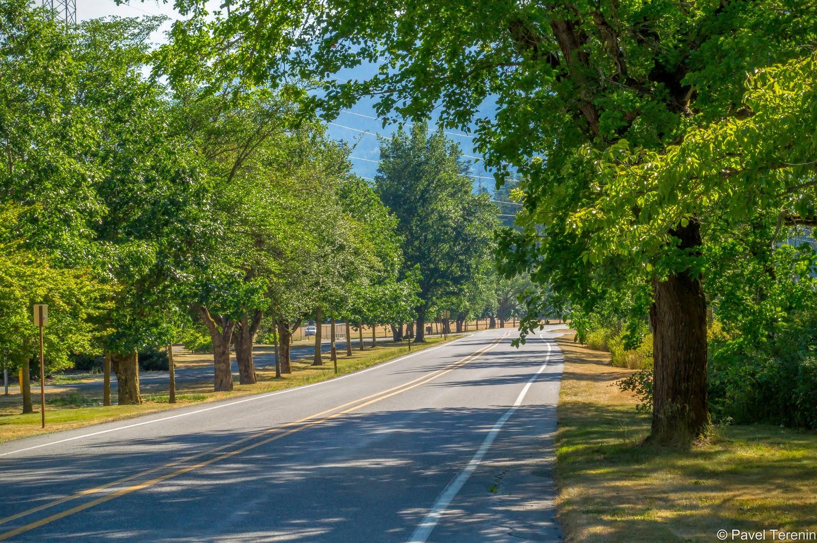 Дорога теперь прямая, с уютными дубовыми посадками по краям.