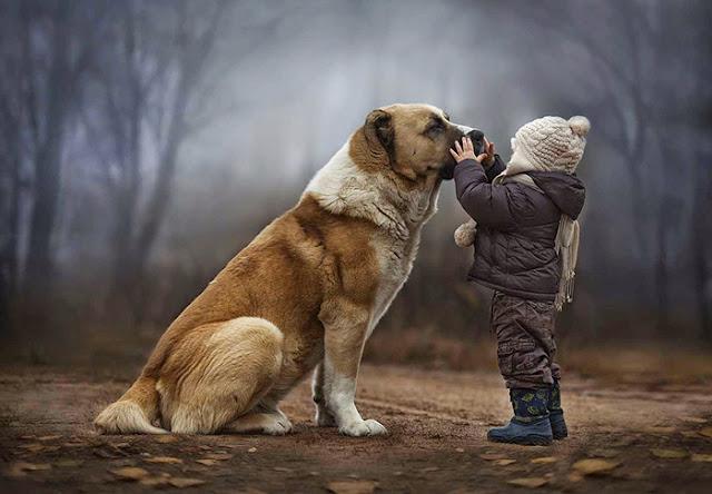 Sejak kapan anjing menjadi sahabat bagi manusia