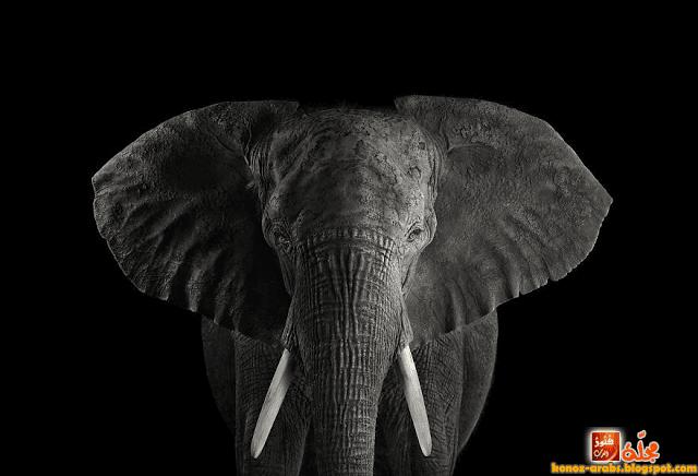 10 صور غريبة و حقيقية لحيوانات الأمازون !