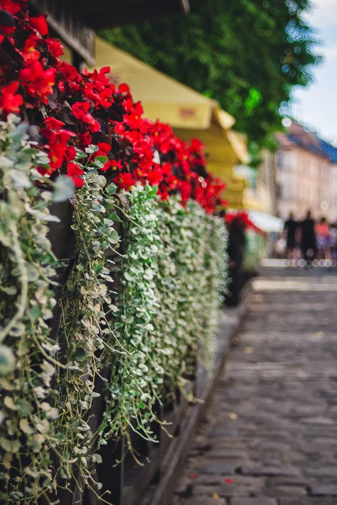 Lviv in the summer Ukraine