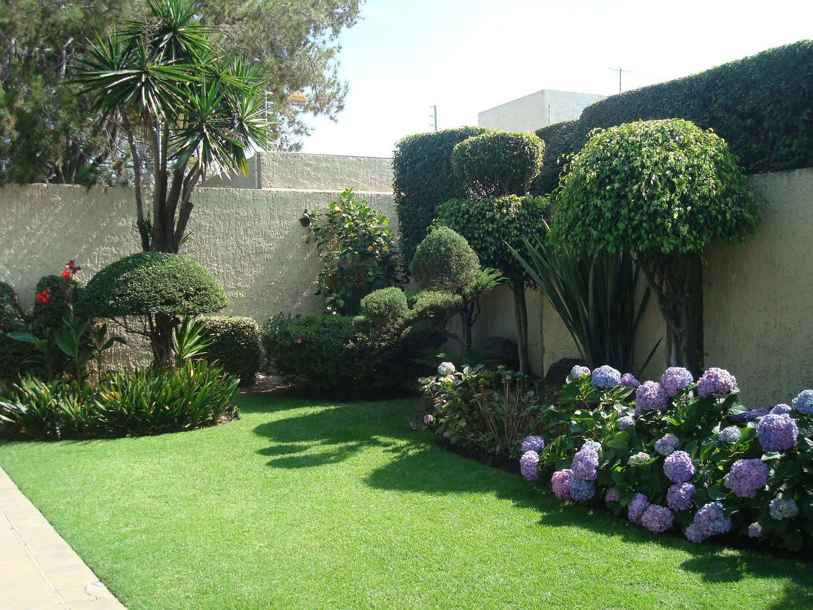 Sancarlosfortin flores de hortensias azules y jardin en paseos del prado - Cuidados de las hortensias ...