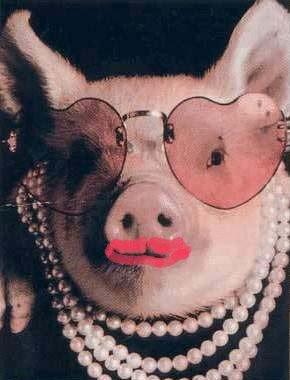 photo marrante d'un cochon