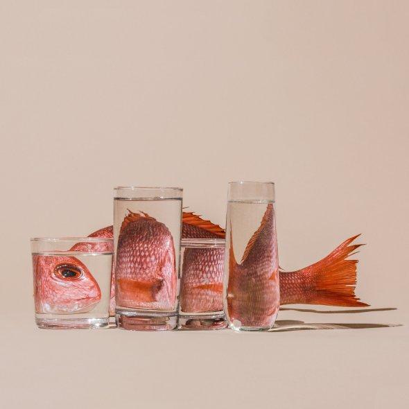 Suzanne Saroff arte fotografia perspectiva comida plantas distorcida fragmentada através água vidro surreal