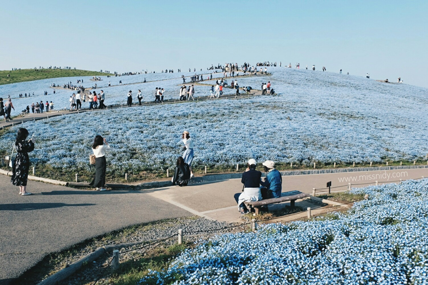 nemophilia in hitachi seaside park japan