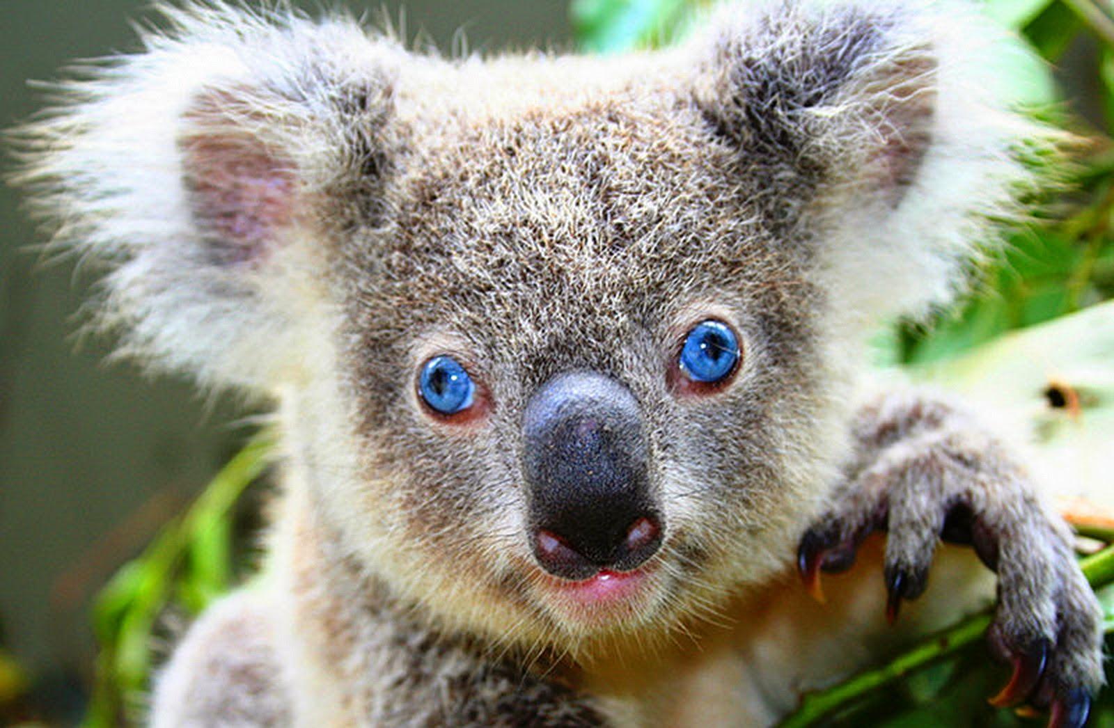 7 Binatang Dengan Kemampuan Berjalan Paling Lambat Di Dunia