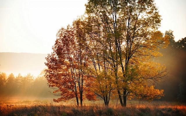 Afbeelding met herfst landschap