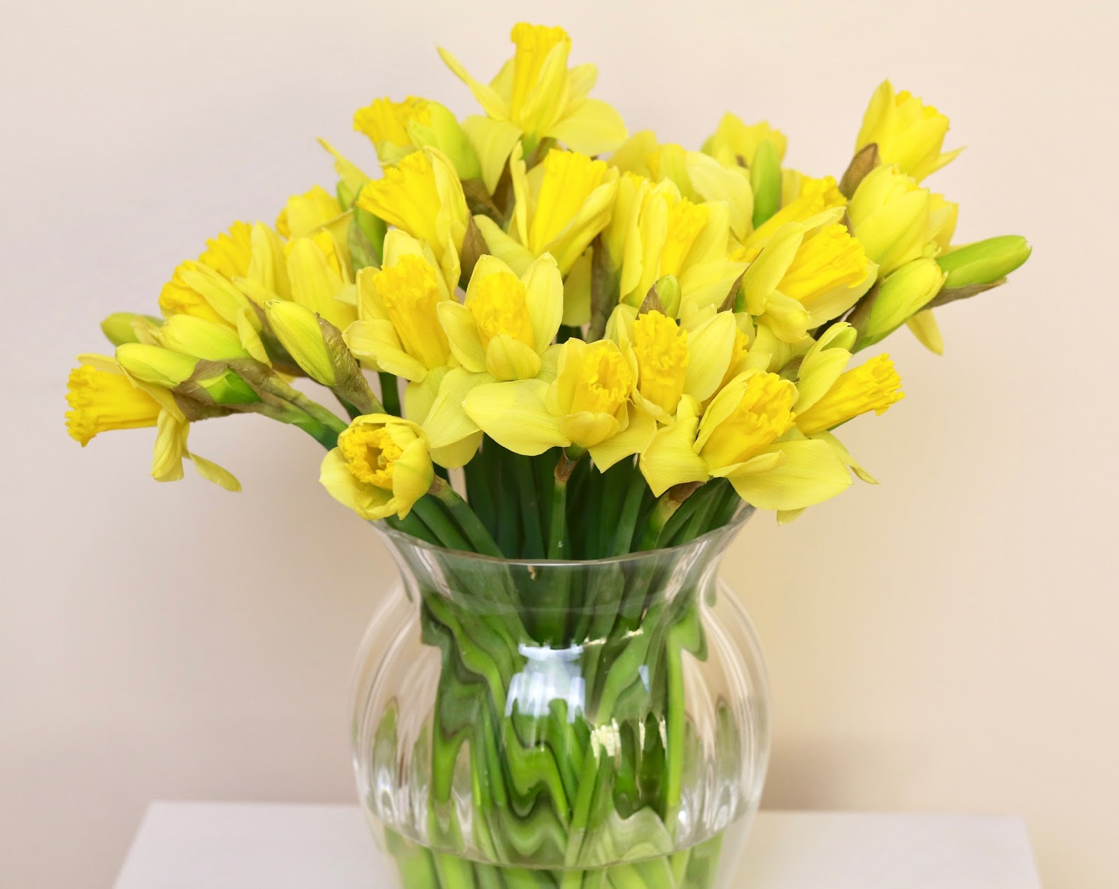 Daffodils | The Lifestyle Archives