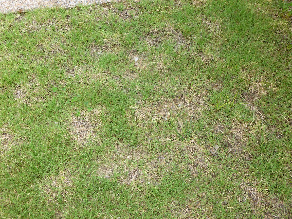 Garden Of Aaron Oh Give Me A Home Where The Buffalo Grass Roams