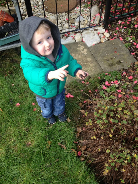 toddler in garden pointing up