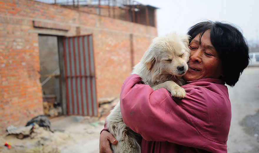 Her shelter depends on volunteers and donations to operate - Chinese Woman Travels 1,500 Miles And Pays $1,100 To Save 100 Dogs From Chinese Dog-Eating Festival