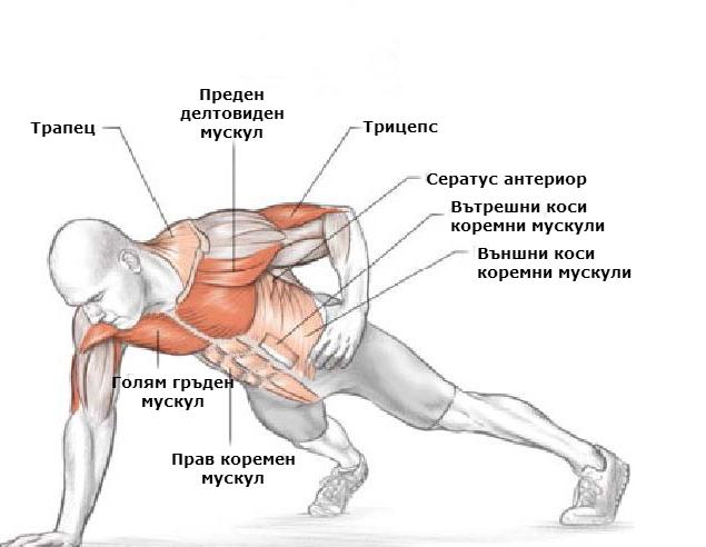 Кои мускули вземат участие при изпълнението на лицеви опори с една ръка