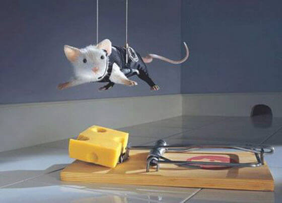 Mouse hovers over cheese on set mousetrap, like Tom Cruise in Mission Impossible