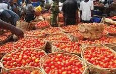 Tomato Pest