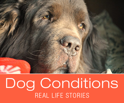 Dog Conditions - What the Heck is Intestinal Lymphangiectasia? Leroy's Story