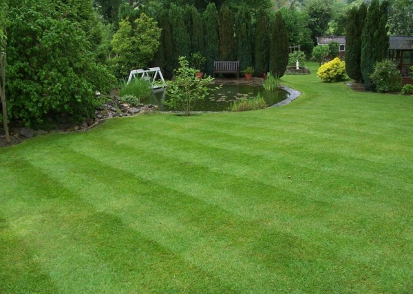 Home Garden and Landscaping: Lawn Making