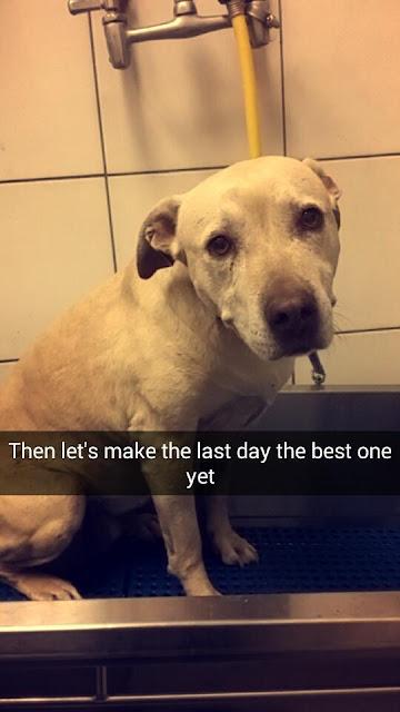 Kể cả bạn không phải là người yêu chó, khi xem hết bộ ảnh này bạn cũng sẽ bật khóc!