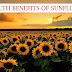 Ito pala ang Health Benefits na Makukuha sa Sunflower. Basahin dito.