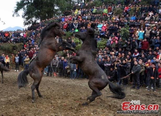 Miao Horse Festival