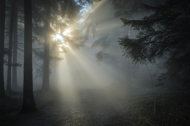 phobia sinar matahari